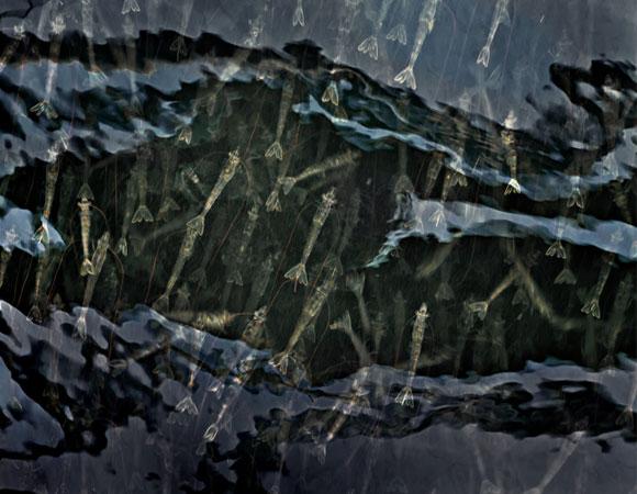 thủy sản thái mỹ